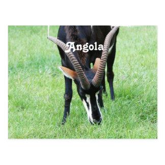 Angola Sable Antelope Postcard