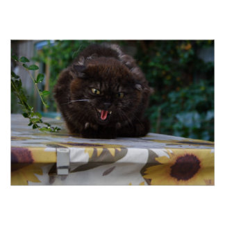Angry Black Cat Poster