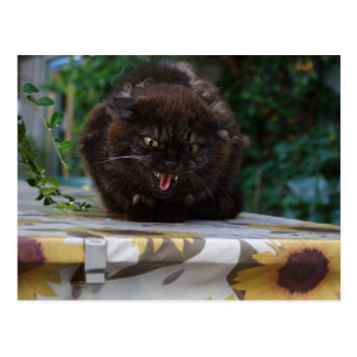Angry Cat Postcard