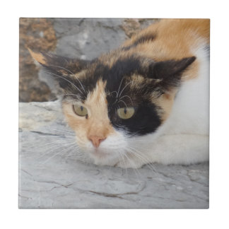 "Angry Cat Small (4.25"" x 4.25"") Ceramic Photo Tile"