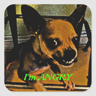 Angry Chihuahua Square Sticker