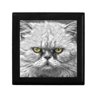 Angry Golden Cat Eyes Gift Box