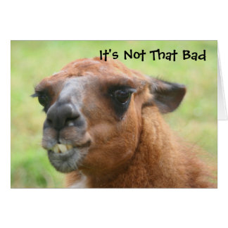 Angry Llama Humorous 30th Birthday Card