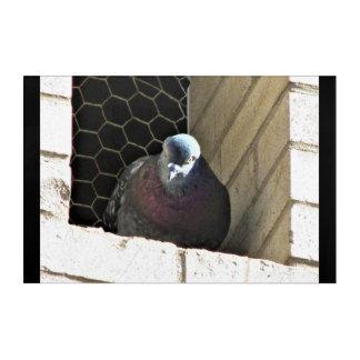 Angry Pigeon! Acrylic Wall Art