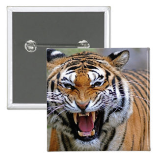 Angry Tiger Square Button