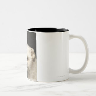 Angry white Shih Tzu with brown eyes Two-Tone Mug