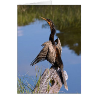 Anhinga at the Pond Card