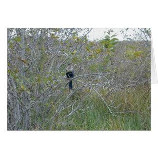 Anhinga, Florida Everglades, 1999 Card