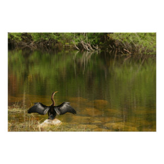 Anhinga in the Everglades Poster