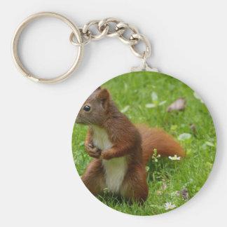 animal-887 basic round button keychain