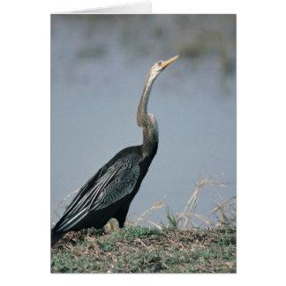 Animal-Anhinga Card