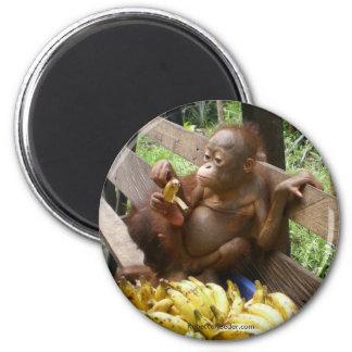 Animal Baby Food Magnet