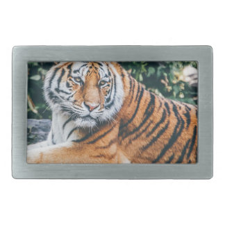 Animal Big Cat Safari Tiger Wild Cat Wildlife Zoo Belt Buckles