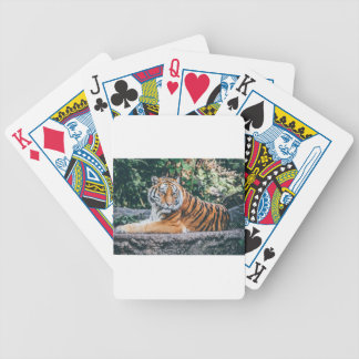 Animal Big Cat Safari Tiger Wild Cat Wildlife Zoo Bicycle Playing Cards