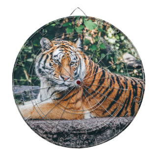 Animal Big Cat Safari Tiger Wild Cat Wildlife Zoo Dartboard