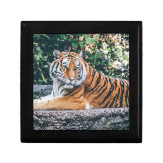 Animal Big Cat Safari Tiger Wild Cat Wildlife Zoo Gift Box