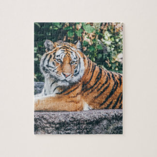 Animal Big Cat Safari Tiger Wild Cat Wildlife Zoo Jigsaw Puzzle