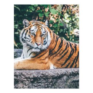 Animal Big Cat Safari Tiger Wild Cat Wildlife Zoo Letterhead