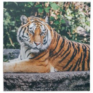 Animal Big Cat Safari Tiger Wild Cat Wildlife Zoo Napkin