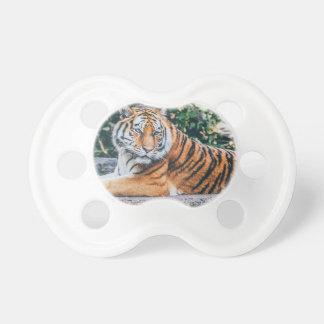 Animal Big Cat Safari Tiger Wild Cat Wildlife Zoo Pacifier