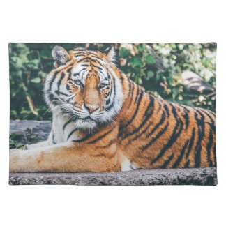 Animal Big Cat Safari Tiger Wild Cat Wildlife Zoo Placemat