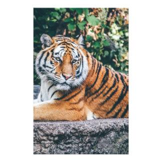 Animal Big Cat Safari Tiger Wild Cat Wildlife Zoo Stationery