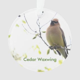 Animal Bird Cedar Waxwing