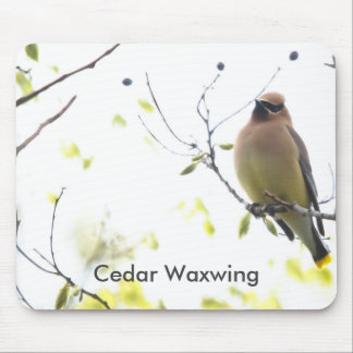 Animal Bird Cedar Waxwing Mouse Pad