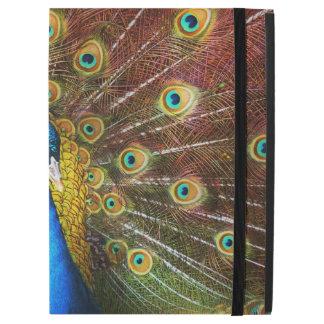 Animal - Bird - Peacock proud