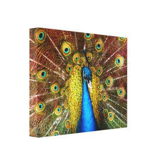 Animal - Bird - Peacock proud Canvas Print