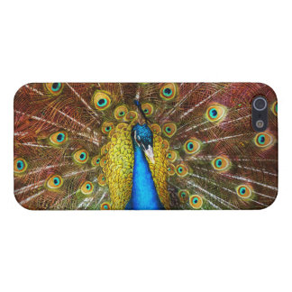 Animal - Bird - Peacock proud iPhone 5/5S Case