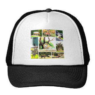 Animal Collage Trucker Hat
