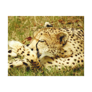 Animal Collection - Relaxing Cheetah Canvas Print