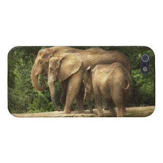 Animal - Elephant - Tight knit family iPhone 5 Cases