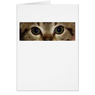 Animal Eyes Series - Cat 1 Card