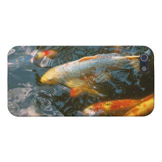 Animal - Fish - Bestow good fortune iPhone 5 Cases