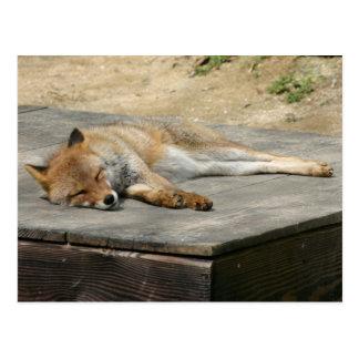 Animal Fox Forest Office Party Shower Digital Art Postcard