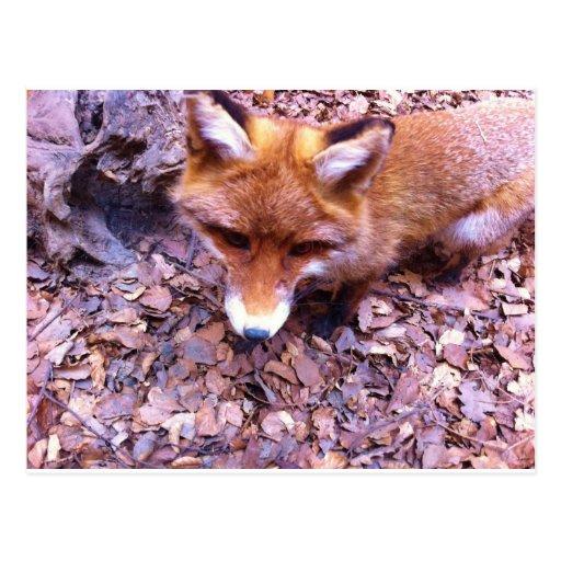 Animal Fox Forest Office Party Shower Digital Art Postcards
