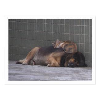 Animal friends Cat dog sleeping together Postcard