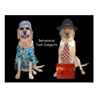 Animal/Lab/Dog Behavior Study Postcard