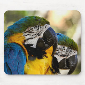 Animal Mousepad Series - Blue & Yellow Macaw