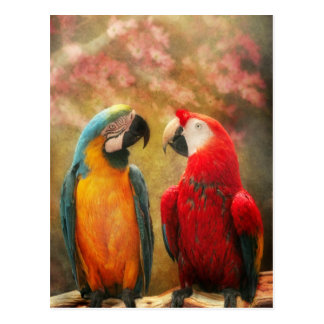 Animal - Parrot - We'll always have parrots Postcard