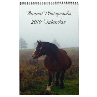 Animal Photographs, 2010 Calendar