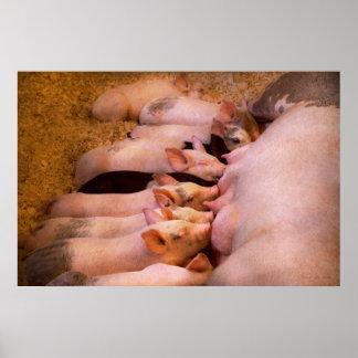 Animal - Pig - Comfort food Poster