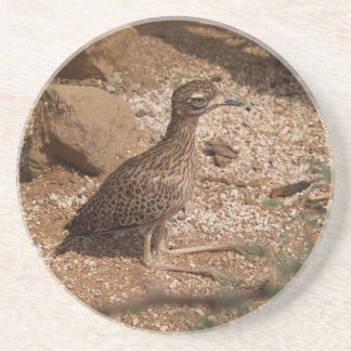 Animal Series---Spotted Bush Thick-Knee Coaster