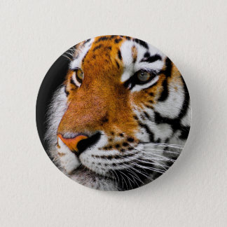 Animal Tiger Cat Amurtiger Predator Dangerous 2 Inch Round Button
