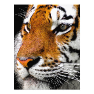 Animal Tiger Cat Amurtiger Predator Dangerous Letterhead