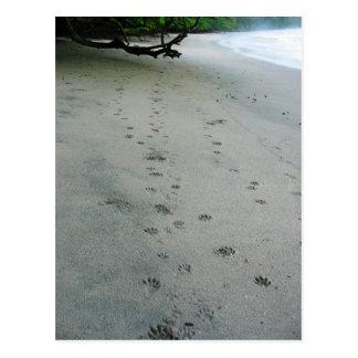 Animal Tracks - Manuel Antonio Park, Costa Rica Postcard