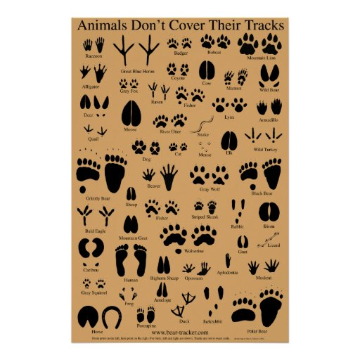 Animal Tracks Poster Zazzle Ca