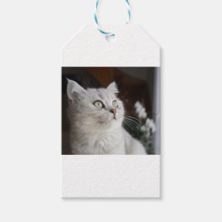 Animals Cat Feline Gift Tags